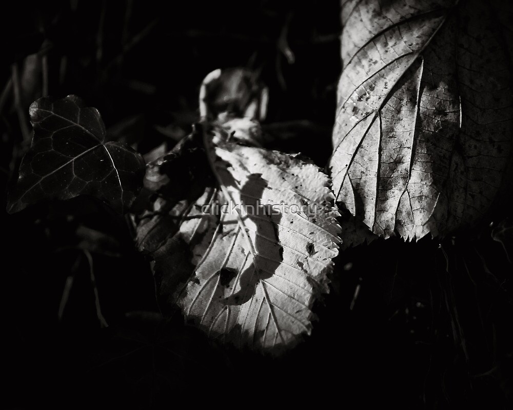 A woodland private dancer by clickinhistory