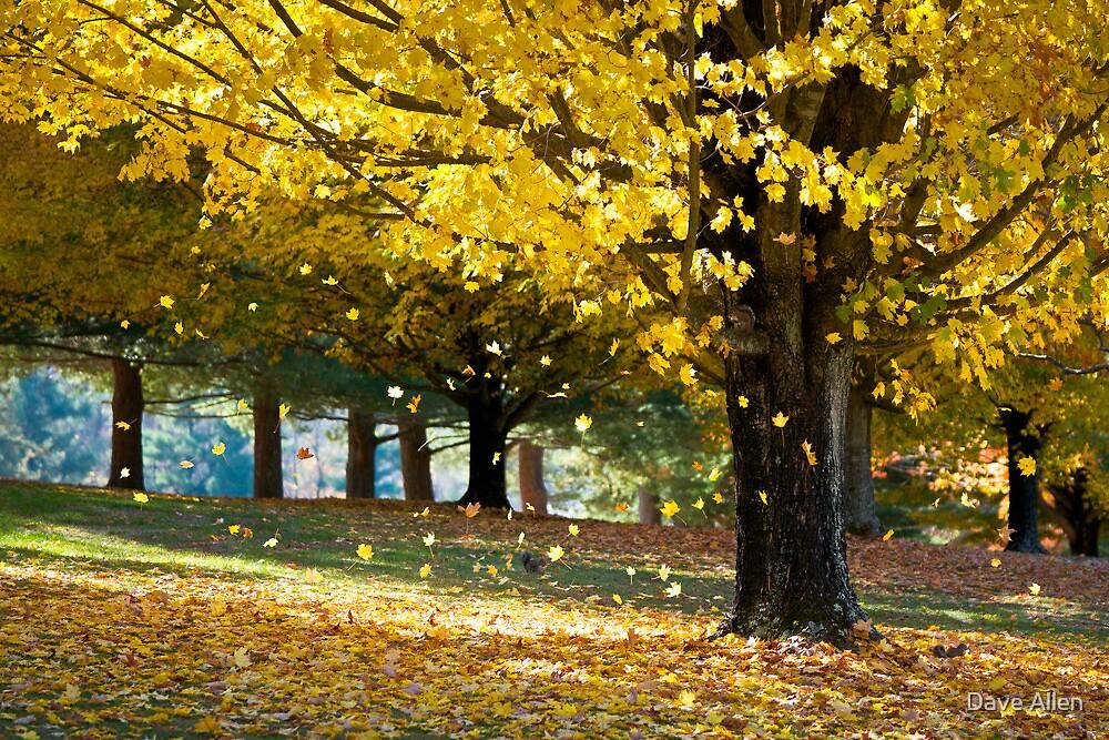 Wonderland - Autumn Maple Tree Leaf Storm by Dave Allen