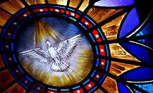 Peace Dove  by nadinecreates