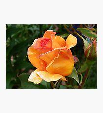 Orange Rose Bud Photographic Print