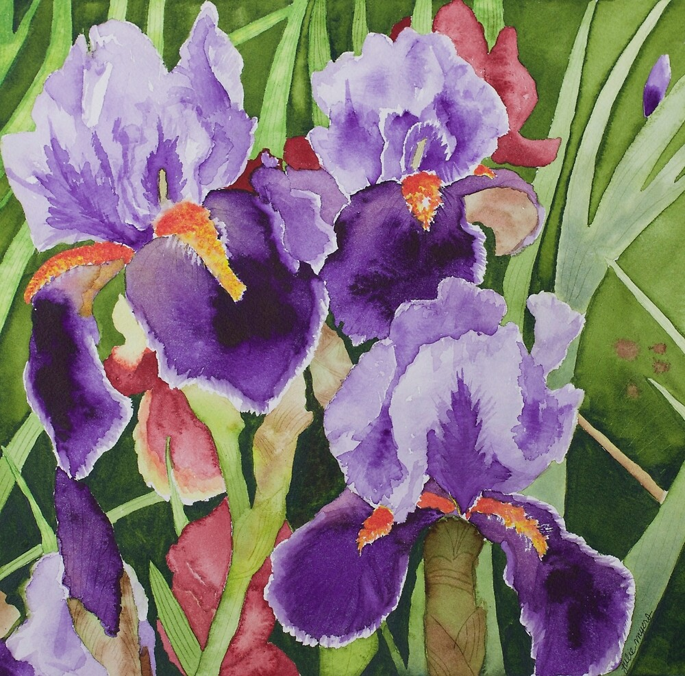 Bearded Irises by Julie Myers