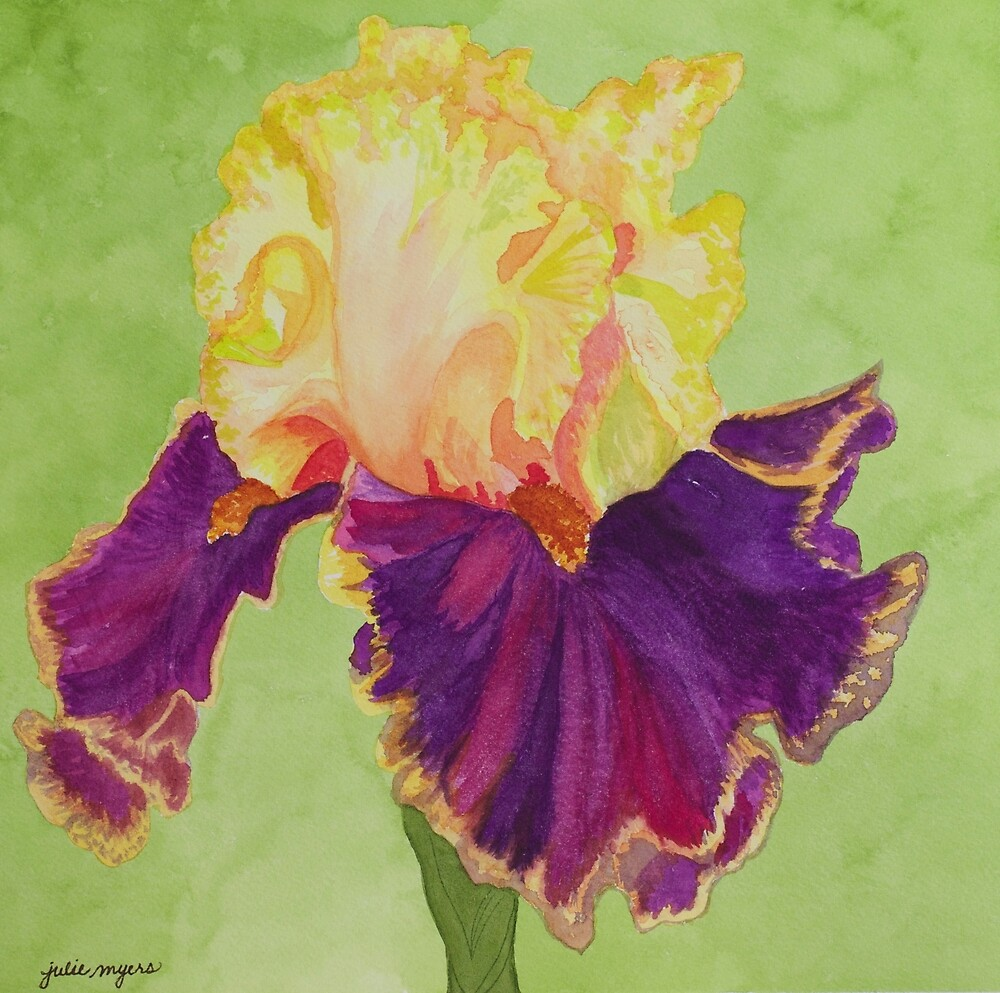 Iris 'Decadence' by Julie Myers