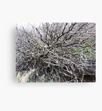 scary trees 1 Canvas Print
