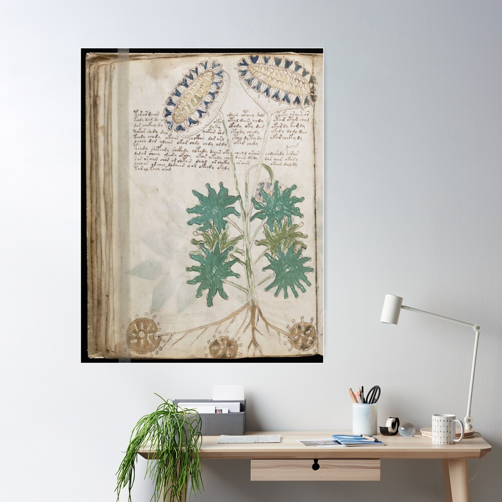 Voynich Manuscript. Illustrated codex hand-written in an unknown writing system: Poster