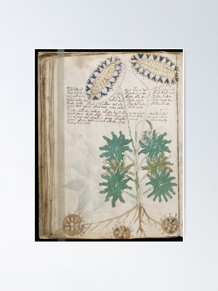 Alternate view of Voynich Manuscript. Illustrated codex hand-written in an unknown writing system Poster