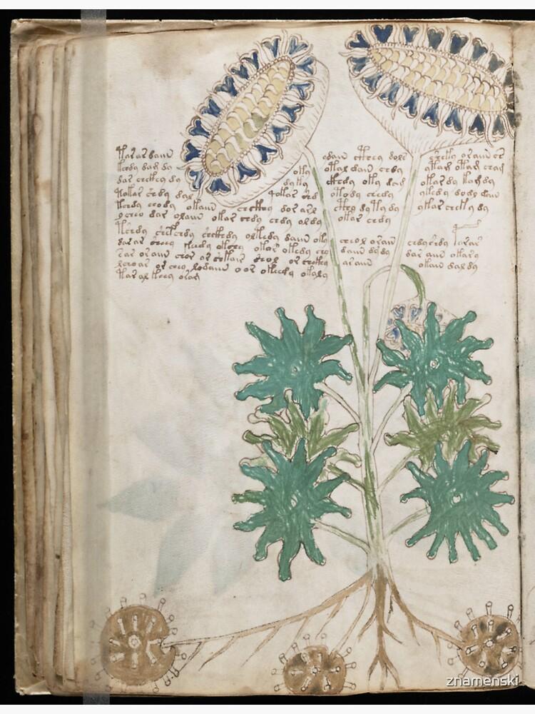 Voynich Manuscript. Illustrated codex hand-written in an unknown writing system by znamenski