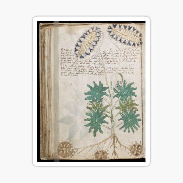 Voynich Manuscript. Illustrated codex hand-written in an unknown writing system Sticker