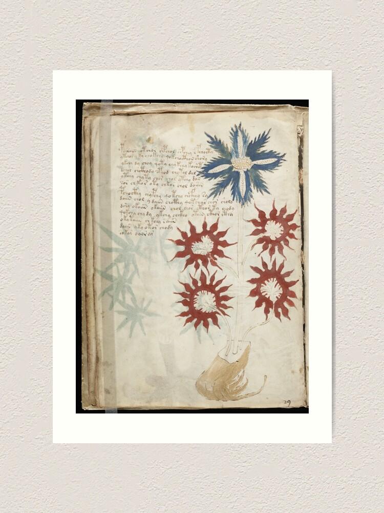 Alternate view of Voynich Manuscript. Illustrated codex hand-written in an unknown writing system Art Print