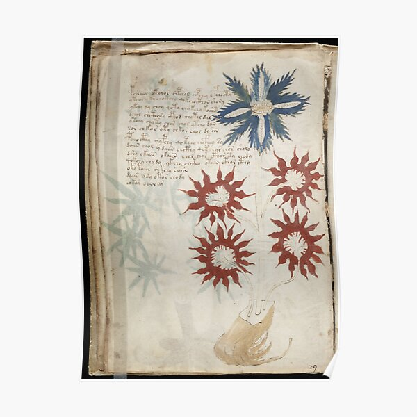 Voynich Manuscript. Illustrated codex hand-written in an unknown writing system Poster