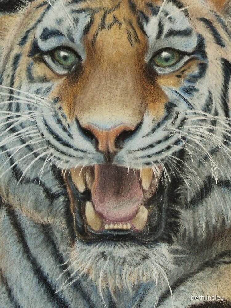 Tiger by bethlindley
