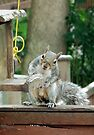 Squirrel 9 - have you seen my nuts? by Peter Barrett