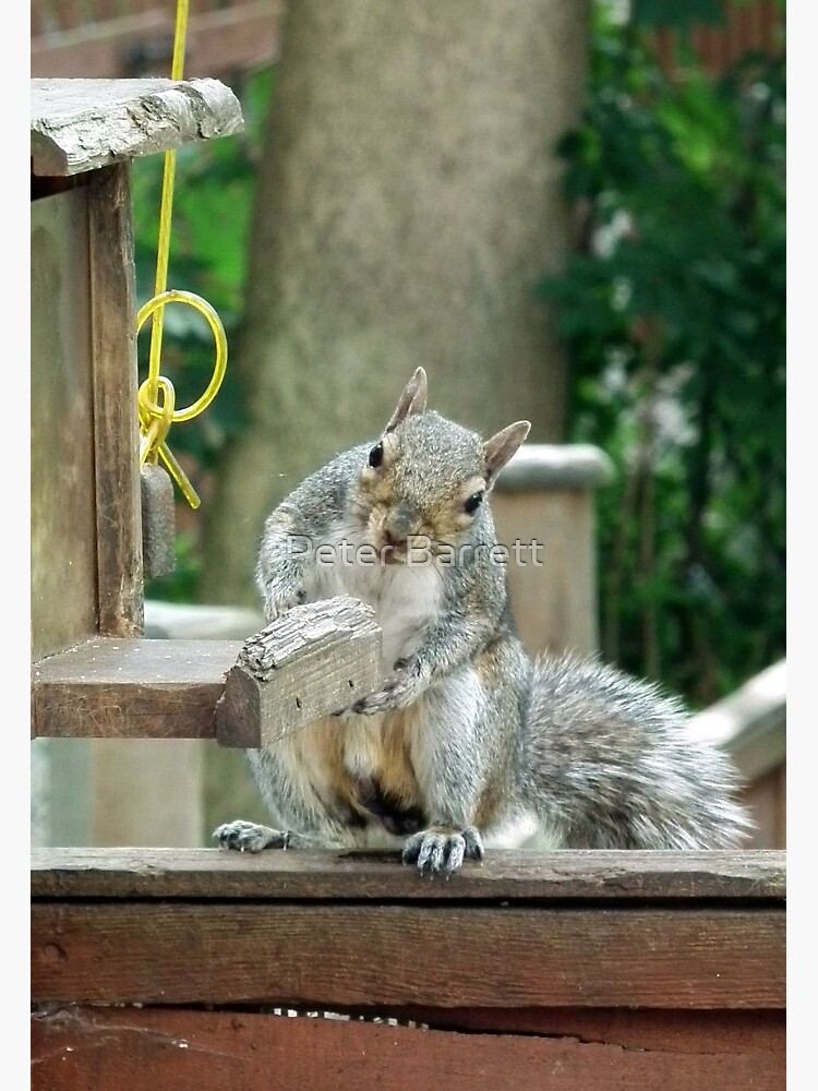 Squirrel 9 - have you seen my nuts? by hartrockets
