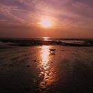 Pawprints on the sand by Joanna Jeffrees