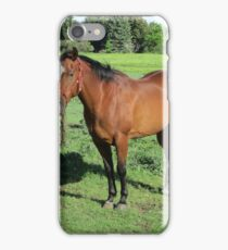 Beautiful Horse iPhone Case/Skin