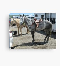 Grey horse Canvas Print