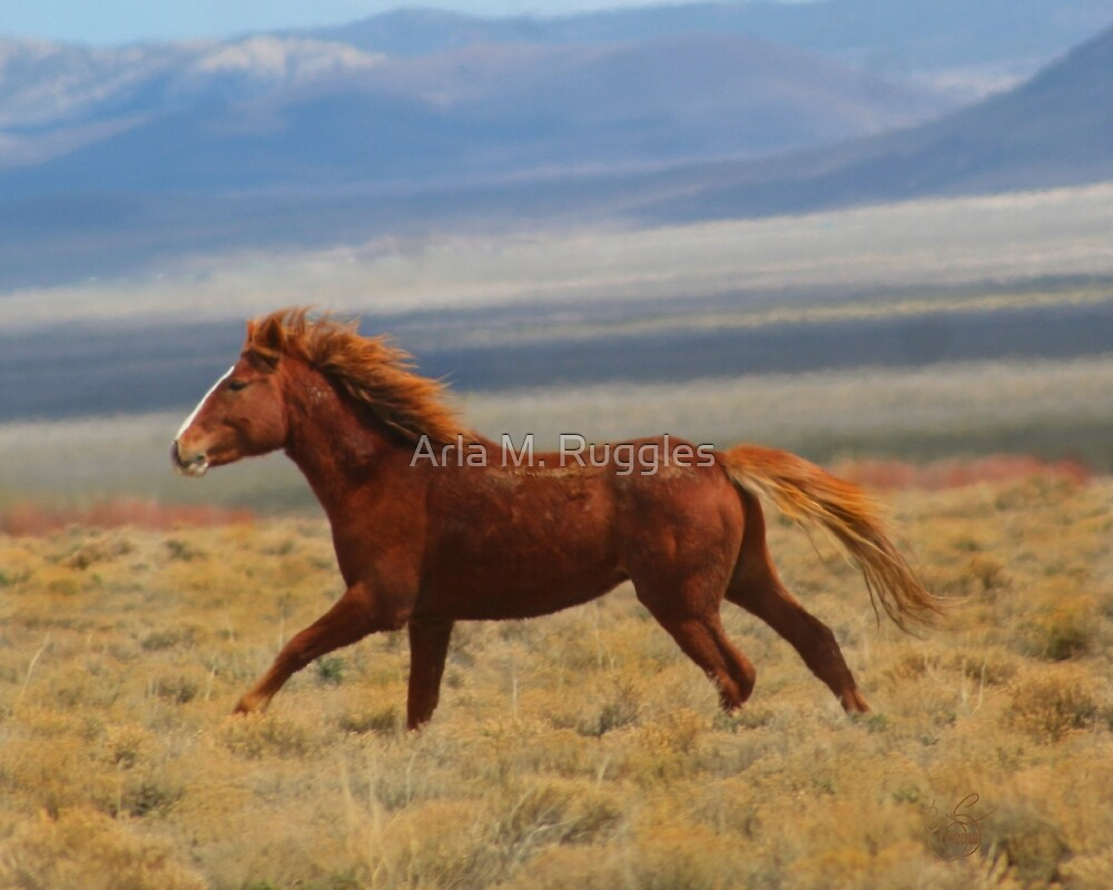 In The Wind by Arla M. Ruggles