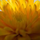 yellow and light by Dean Messenger