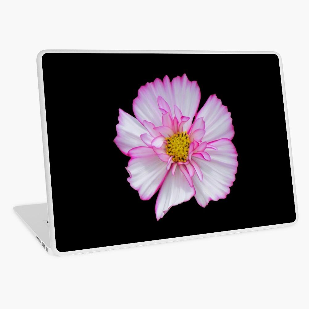 Blume in pink & weiß, Blumen, Blüte, Garten, Natur Laptop Folie