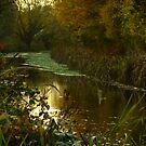 Autumn in Surrey by Themis
