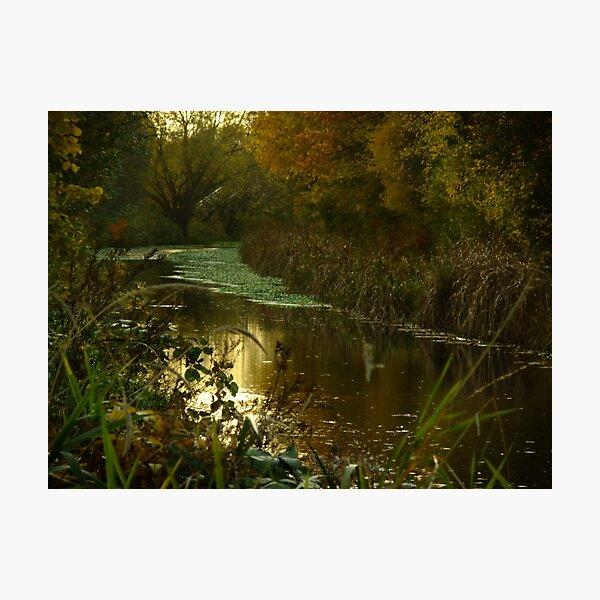 Autumn in Surrey Photographic Print