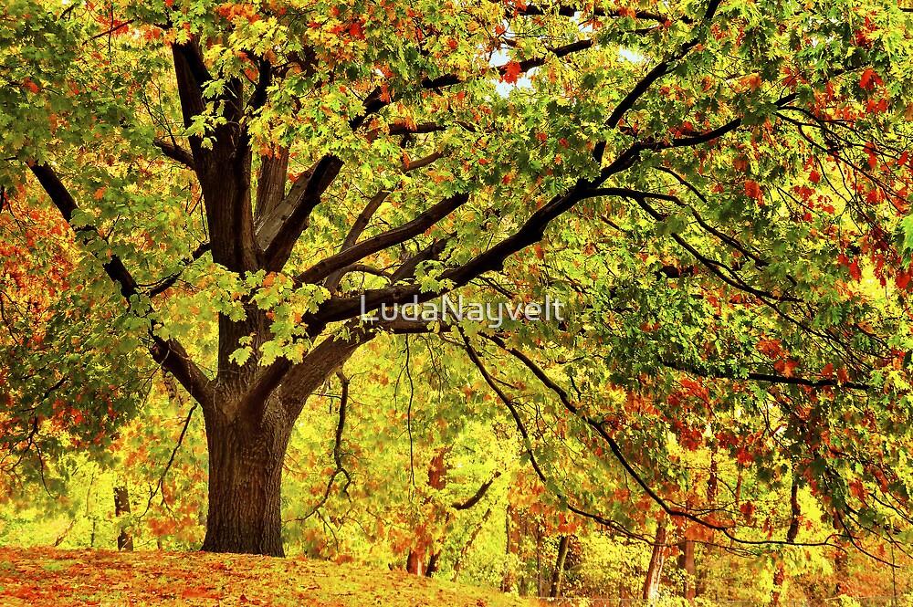 Golden Oak Tree  by LudaNayvelt