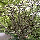 Gnarly Tree by Beverley  Johnston