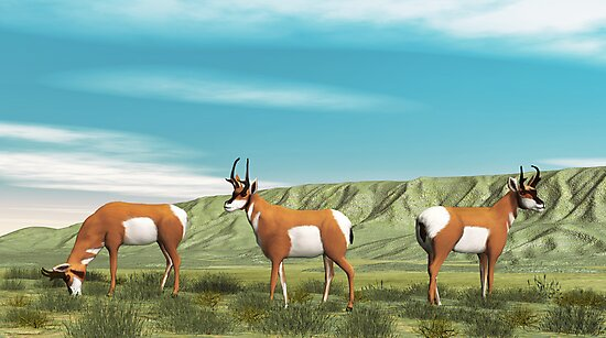 American Antelope by Walter Colvin