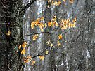 Snow and Leaves - Dunrobin by Debbie Pinard