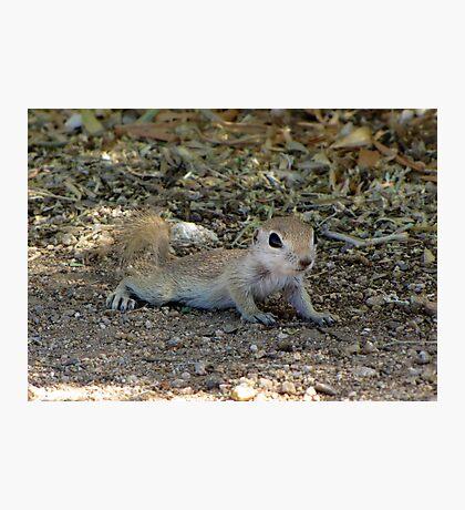 Round-tailed Ground Squirrel ~ Baby II Photographic Print