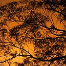 Fire in sunset sky by tasadam