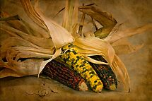 Maize by TeresaB
