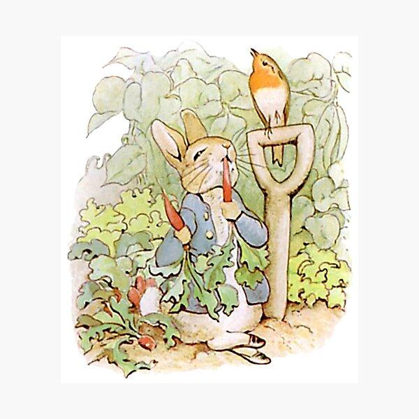 Peter Rabbit mangeant des carottes Impression photo