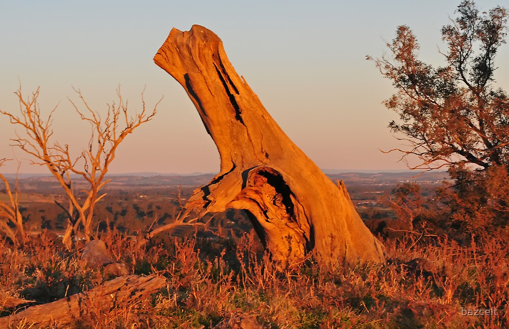Beyond the Red (Not Black) Stump by bazcelt