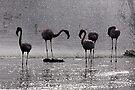 Flamingos at the Geysir of Lake Bogoria by Henry Jager