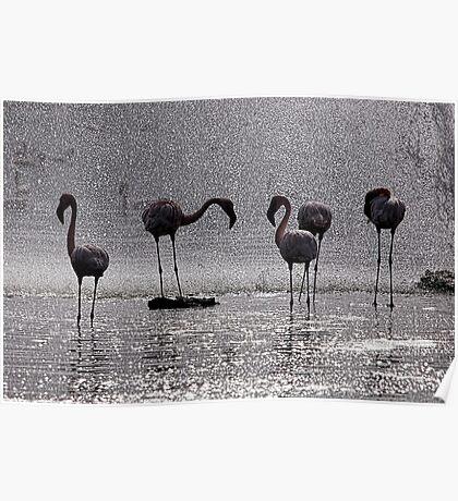 Flamingos at the Geysir of Lake Bogoria Poster