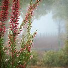 Morning Fog In My Garden (Erica) by Eve Parry
