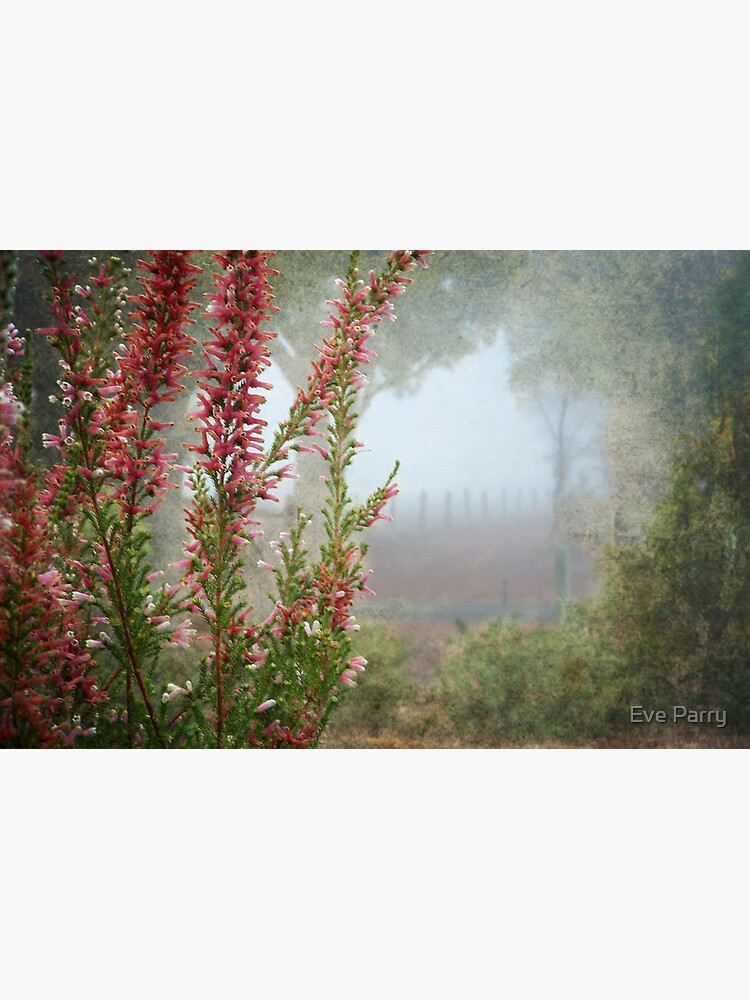 Morning Fog In My Garden (Erica) by AdamsWife