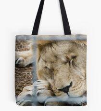 Sleepy Lion - Zoo Arcachon Tote Bag