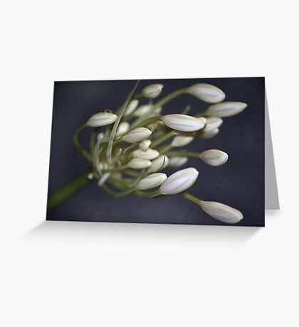 ~ Aggy ~ Greeting Card