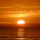 Flying Home  At Sunset. by Henry Murray