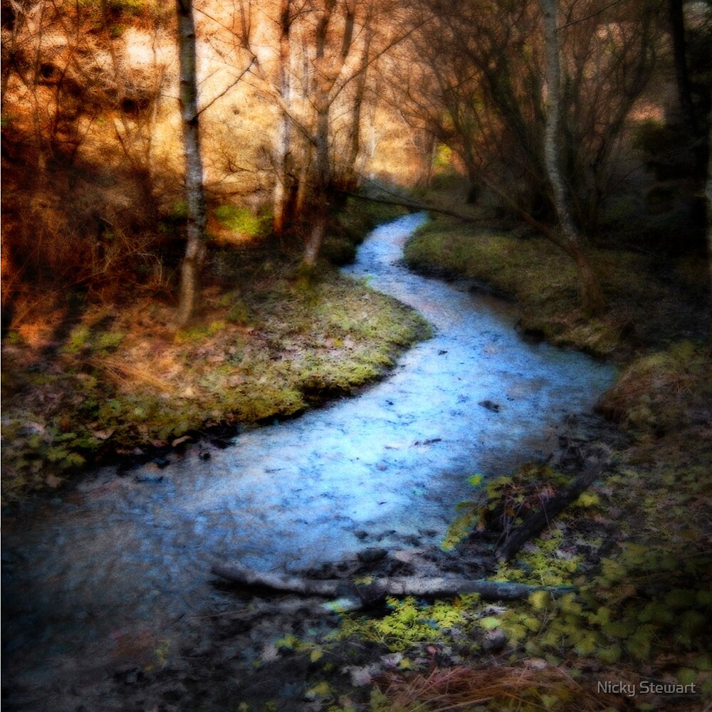 St Catherine's Woods by Nicky Stewart