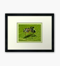 super fly Framed Print