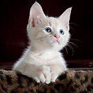 Kätzchen von franceslewis