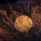 Bad Moon Rising by chloemay