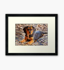 Gracie - A Beagle Cross King Charles Spaniel Framed Print