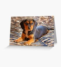 Gracie - A Beagle Cross King Charles Spaniel Greeting Card