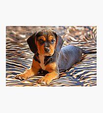 Gracie - A Beagle Cross King Charles Spaniel Photographic Print
