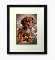 Gracie II - A Beagle cross King Charles Spaniel Framed Print