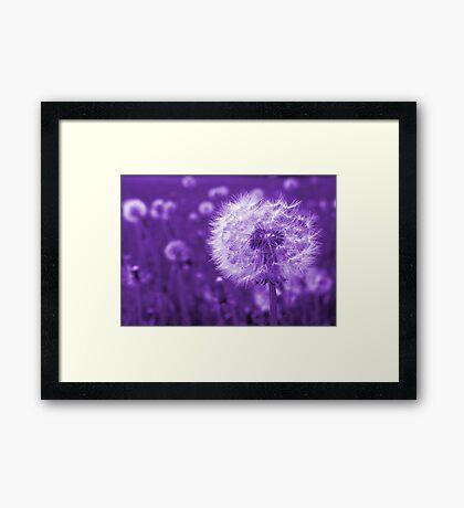 Purple Dandelion Time Peace Framed Print