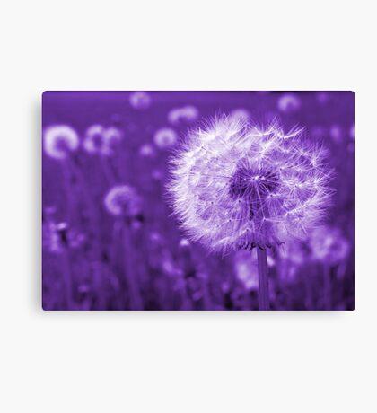 Purple Dandelion Time Peace Canvas Print